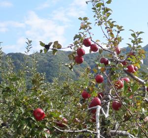りんごと空